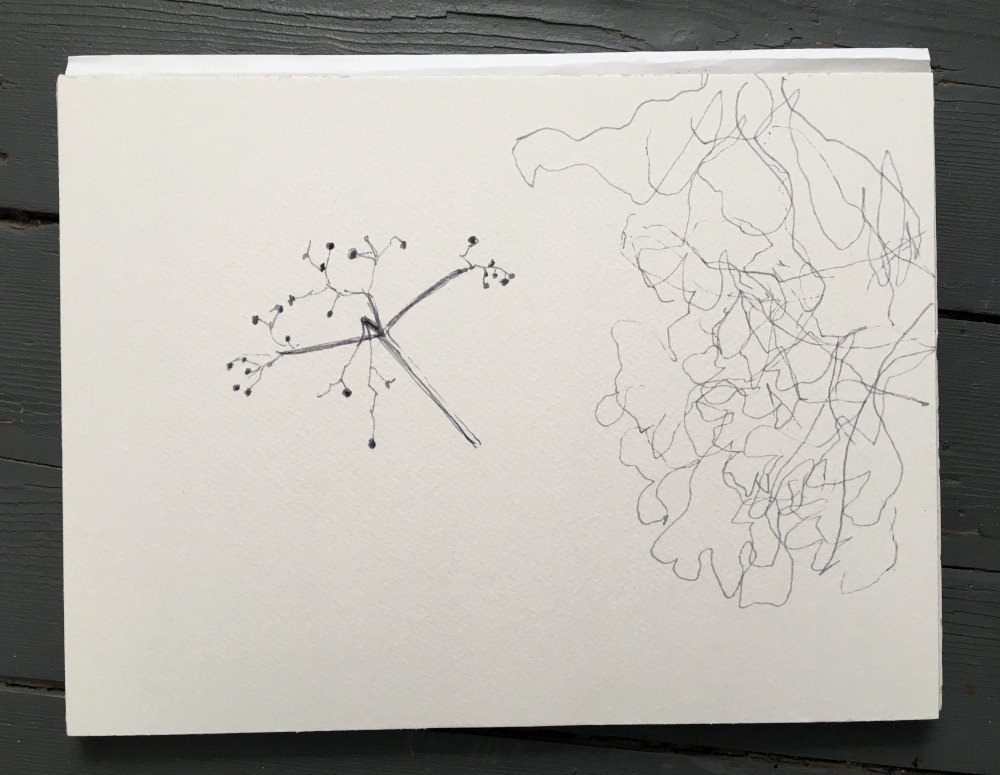 Elder drawing 25 August